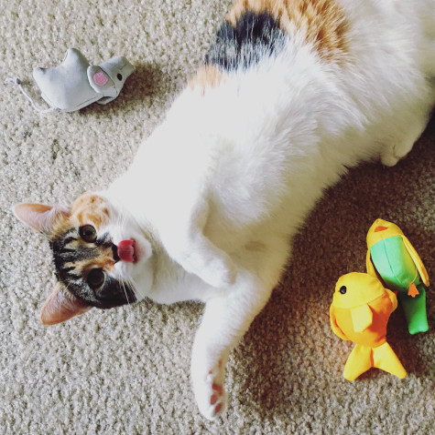 Beco plüssfigura macskáknak