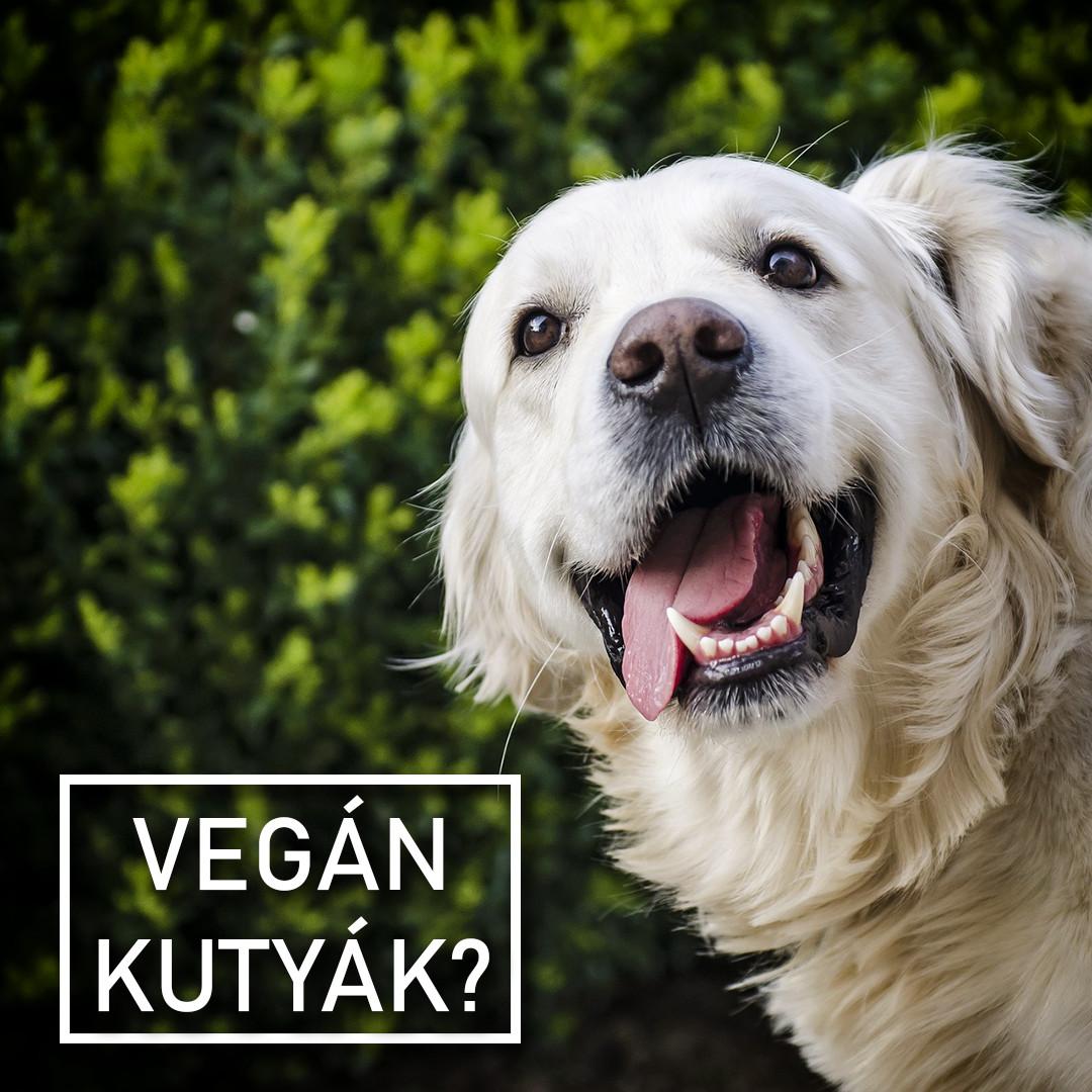 Kutyák növényi étrenden