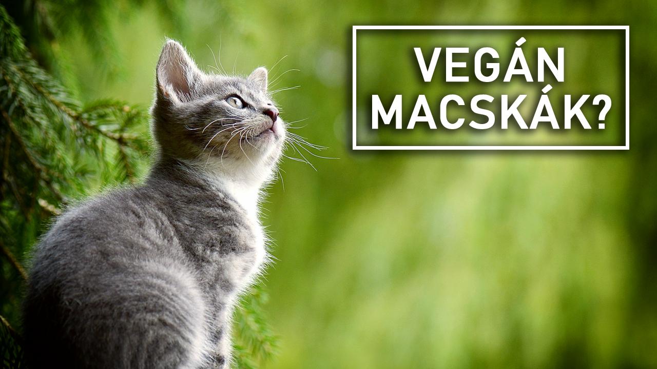 Macskák növényi étrenden
